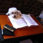 期末試験の勉強でやる気を出すための方法とやる気が出ない原因。