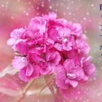 母の日に感謝を贈りたい!お花・カーネーション通販サイト一覧