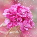 母の日のお花(カーネーション)以外の通販ギフト一覧。心を込めてプレゼントすべし。