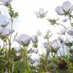 【月曜から夜ふかし】なぜ人は40歳を過ぎると花を愛でるようになるのか?