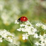 夏の小さい虫を退治・駆除する対策。おすすめのスプレーやグッズ一覧
