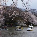 吉祥寺にある井の頭公園でデートをすると別れる?ボートに乗ると破局する?そんなジンクスがある理由と嘘について。