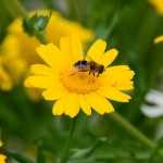 ちまたで話題の花粉症対策の市販薬を紹介。眠くならない天然商品も。
