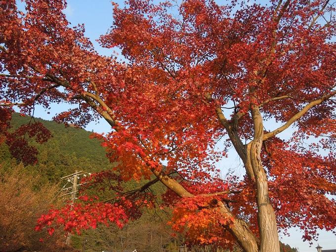 秋の紅葉デート御岳渓谷ハイキングデート8