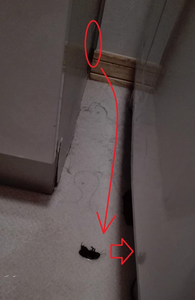 ゴキブリ退治1回目失敗画像